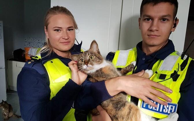 На улице Энергия из окна пятого этажа жилого дома 32-летняя женщина выбросила кошку.