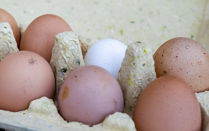 Chicken eggs. Photo is illustrative.