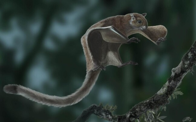 Väljasurnud lendorav Miopetaurista neogrivensis kunstniku nägemuses.