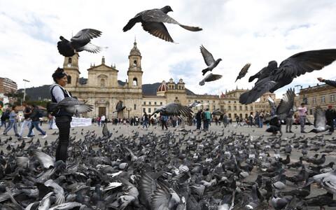 Bogota tuvid