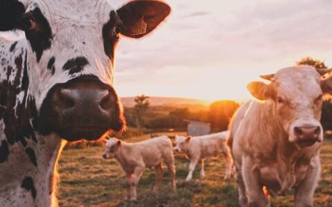 Liha tootmine kahjustab keskkonda märkimisväärselt.