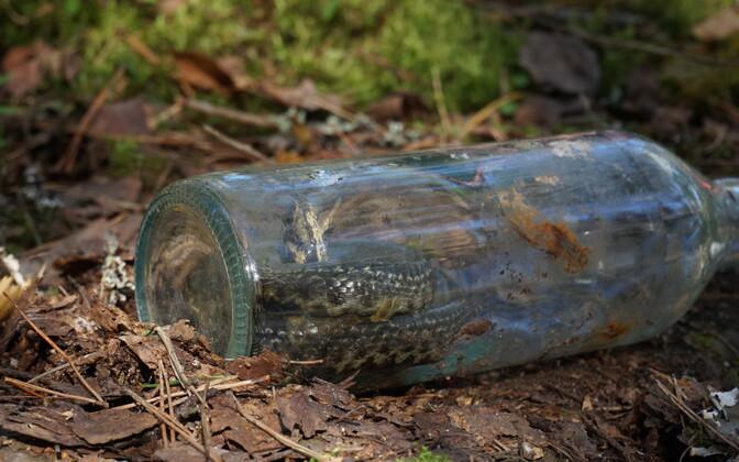 Madu tuli rahvapärimuse järgi pudelisse toppida elusalt, et mürk ravimina toimiks.
