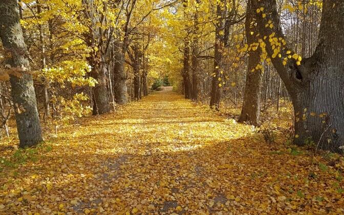 Осень в Эстонии выдалась теплой.