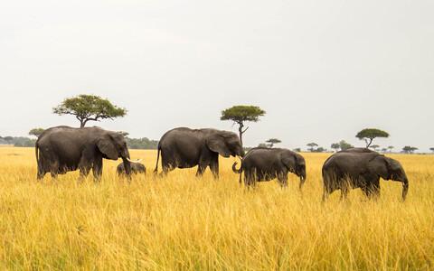 Väljasuremisoht ei ähvarda vaid elevante.