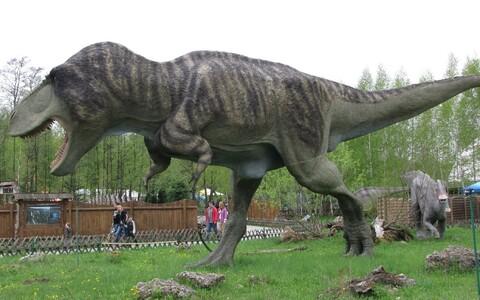 Tyrannosauruse rekonstruktsioon Poolas.