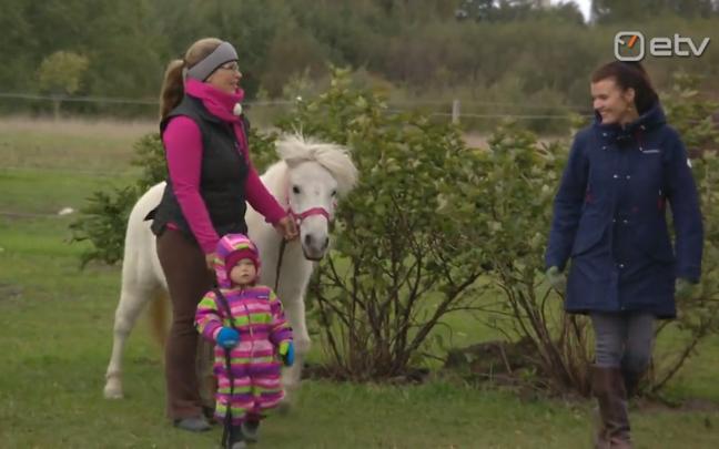 Koordis, Paides elav hobuterapeut Elerin Innos peab talus kolme hobust ja kahte poni.