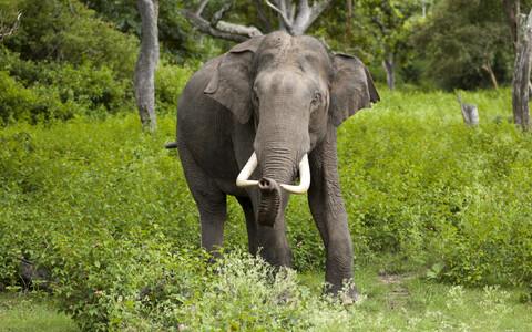 India elevandid on loomariigis head matemaatikud.