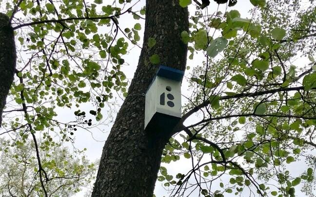 В парках Пыхья-Таллинна устанавливают новые скворечники.