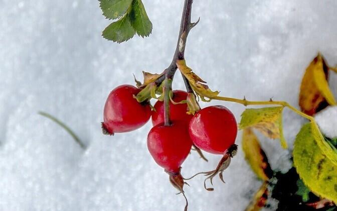Kesk-Eestis lumi maas
