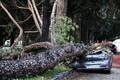 Tormi tõttu autole kukkunud puu Roomas.