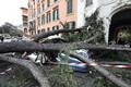 Autodele kukkunud puu Roomas.