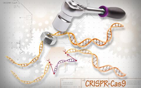 CRISPR meetod teeb organismi genoomis muudatuse, mis ei erine sellest, kuidas muudatus toimuks looduses.
