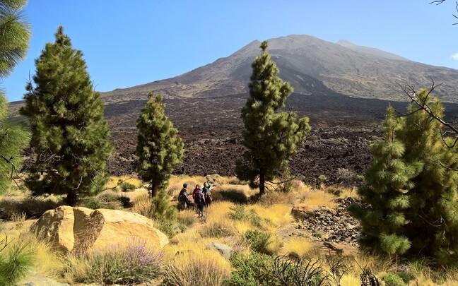 Vulkaanilised ookeanisaared pakuvad suurepärast võimalust uurida, kuidas algselt täiesti elutud saared taime- ja loomaliikide poolt asustatakse. Pildil on näha nii männimetsa kui ka taimede poolt alles asustamata laavavälju Tenerifel