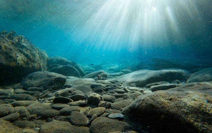 Ookeanide soojenemine jätab jälje ka ökosüsteemidele.