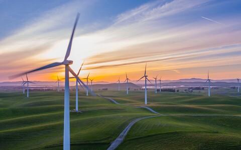 Tuulepargid avaldavad mõju tervele toiduahelale.