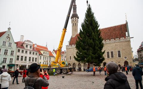 Jõulupuu tee Raekoja platsile