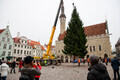 After being taken down on Thursday morning, this year's official Christmas tee arrived in Tallinn's Town Hal Square around midday. 8 November 2018.