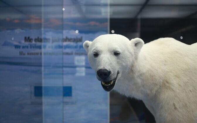 Jääkaru Jääaja keskuses
