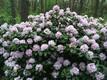 Babite rododendronipark. Foto autor: Läti käimisklubi viib meid igal aastal uude ja põnevasse kohta. Avastamist jätkub veel aastateks.