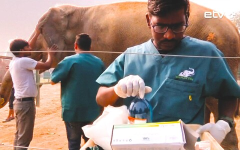 Лечебница для слонов.