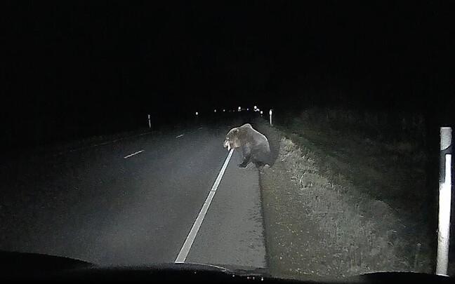 Медведь после столкновения не мог стоять на задних лапах.
