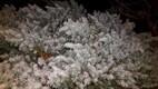 Снег в Полли в Вильяндимаа