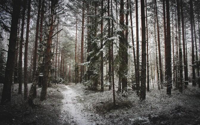 Lumine Eestimaa