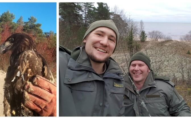 Пограничники Ян и Тыну помогли орлану-белохвосту.