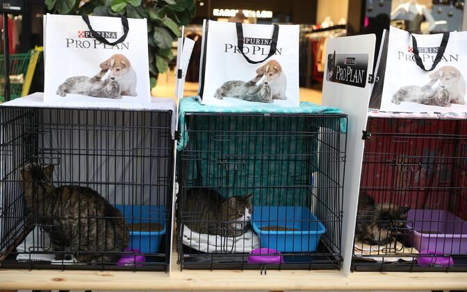 Heategevuslik kassinäitus