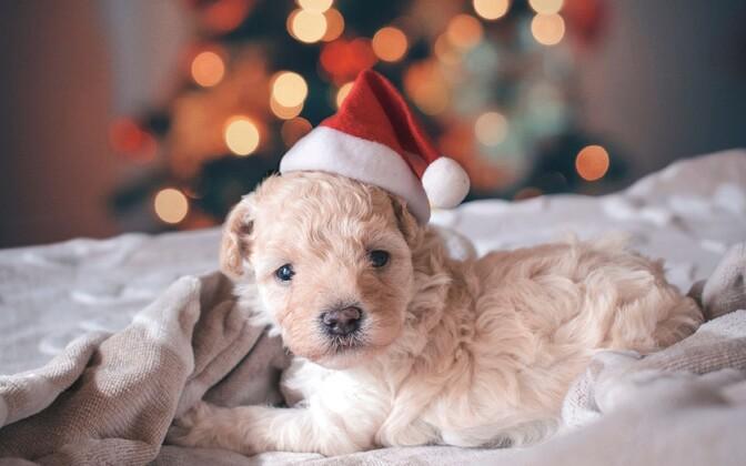 Jõuludega kaasnevat paanikat ja ärevust on võimalik käitumisega vähendada.
