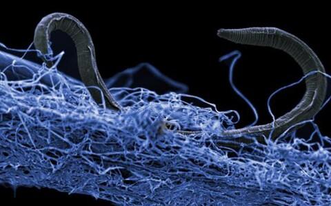 Laboris suutsid kasvatada teadlased hinnanguliselt vaid ainult ühte protsenti eluvormidest.