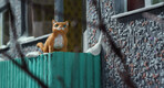 Nukufilm Studios' new claymation short film