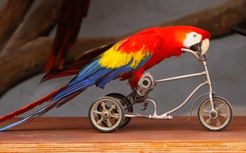Papagoid on üsna nutikad linnud.