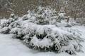 Белое Рождество в Нарва-Йыэсуу