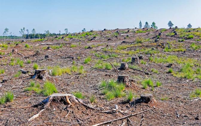 Seega on ühes metsas uuritud süsinikuringest üldistuste tegemine kõigile Eesti metsadele väär,