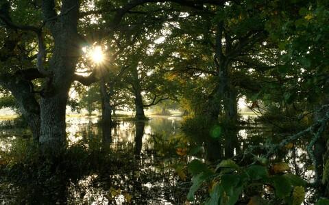 Tõramaa puisniit Soomaa rahvuspargis.