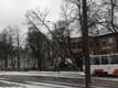 Упавшее на дорогу дерево вызвало пробки на Нарвском шоссе в Таллинне.