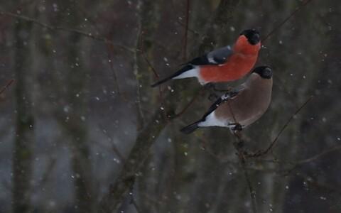 Linnud ei karda tormi
