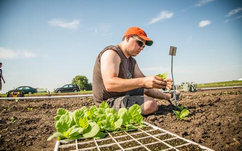 Tubakataimed kasvasid geenimuunduse toel 40 protsenti suuremaks.