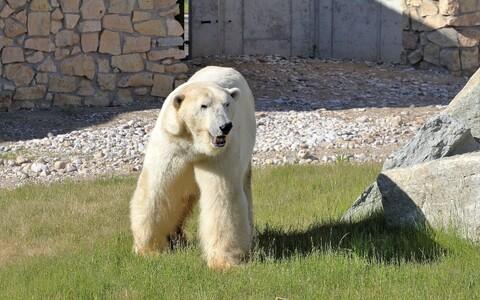 Jääkaru Nord