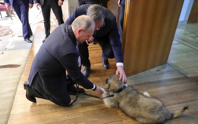 Владимир Путин знакомится с сербским подарком.