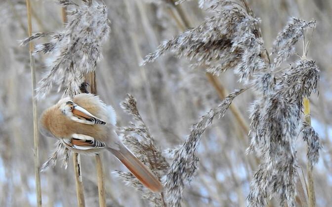 Животные в снегу.