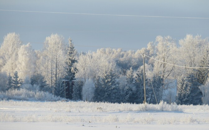 Frost-covered electricity lines in Estonia (picture is illustrative).