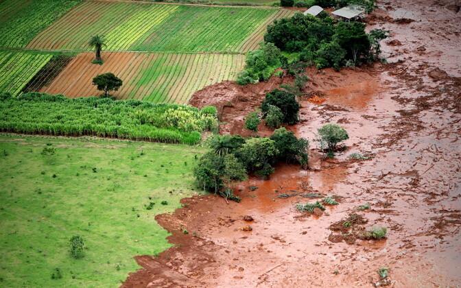 Brasiilia tammivaringu tagajärjed.