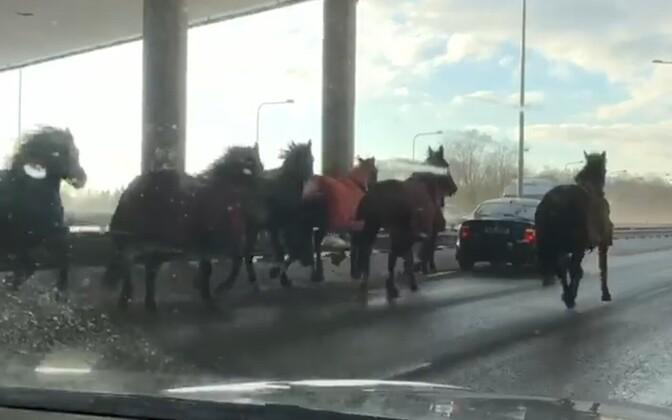 Лошади на Петербургском шоссе.