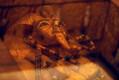 Музей в гробнице Тутанхамона.