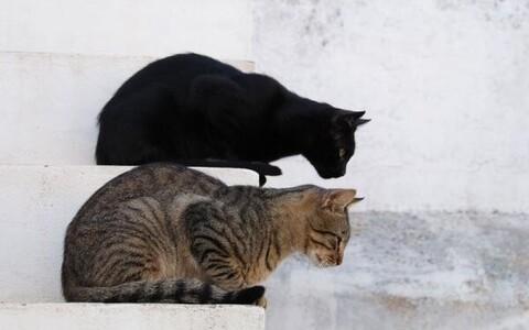Kas seal oli kasse? Selle pildi järgi on õige vastus jah.
