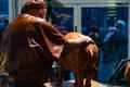 Tauno Kangro modelleerib sea-aasta skulptuuri