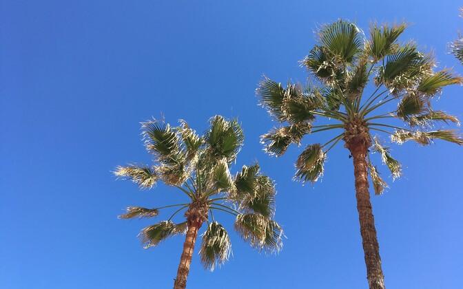 Отдыхать лучше всего под пальмами.