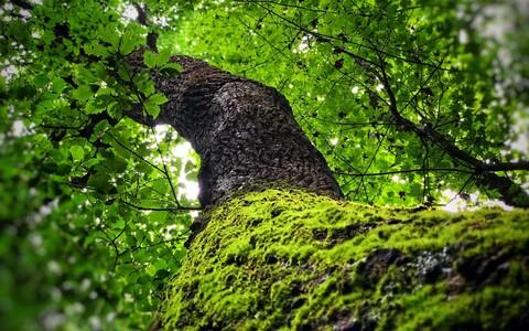 Aastast 2000 kuni aastani 2017 kasvas globaalne taimkatteala ühtekokku terve Amazonase vihmametsa pindala võrra suuremaks.
